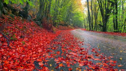 Landscapes nature trees forest leaves grass roads autumn Wallpaper