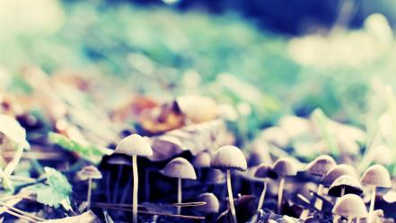 Nature forest mushrooms wallpaper