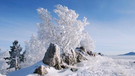 Snow trees stones new year frost 2013 wallpaper