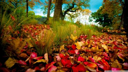 Fallen leaves Wallpaper