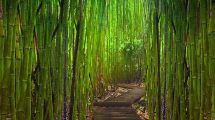 Green landscapes nature bamboo path young wallpaper