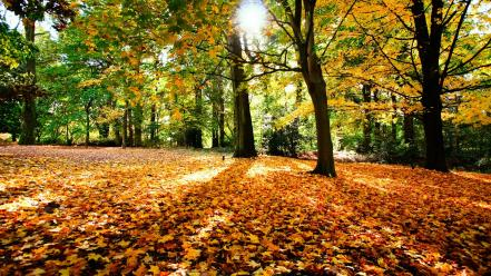 Landscapes nature trees forest sunlight autumn wallpaper