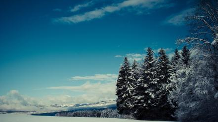 Snow trees nordic pine Wallpaper