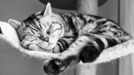 Cats animals sleeping monochrome wallpaper