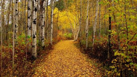 Landscapes nature forest leaves roads autumn Wallpaper