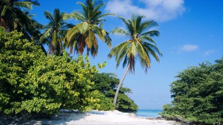 Nature tropical north maldives wallpaper