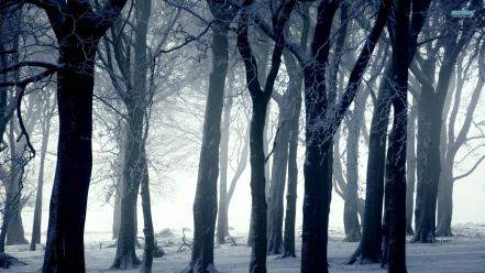 Winter dark forest wallpaper