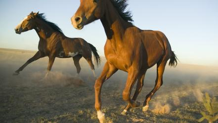 Animals horses new mexico wallpaper