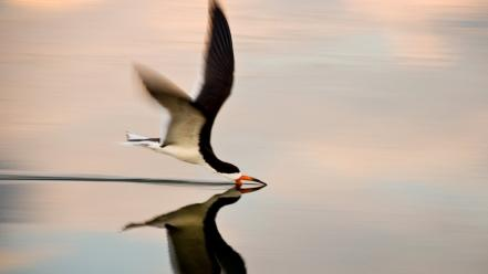Water flying reflections birds wallpaper