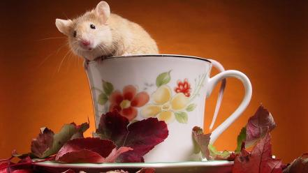 Animals leaves cups mice wallpaper