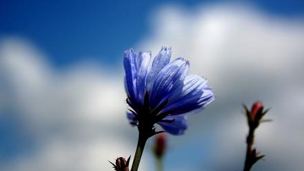Blue nature flowers wind wallpaper