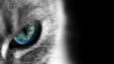 Cats blue eyes siamese cat eye Wallpaper
