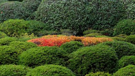 Garden plants bushes wallpaper