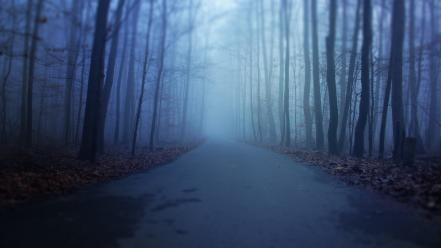 Horror blue winter autumn dark forests scary wallpaper
