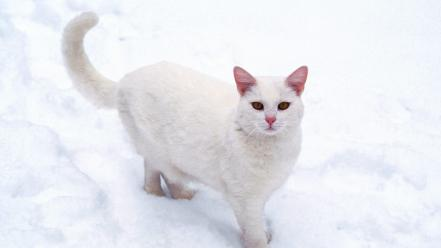 White cats background cat wallpaper