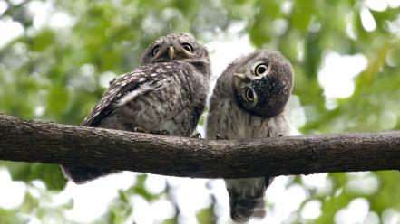 Bokeh owls branches birds wallpaper