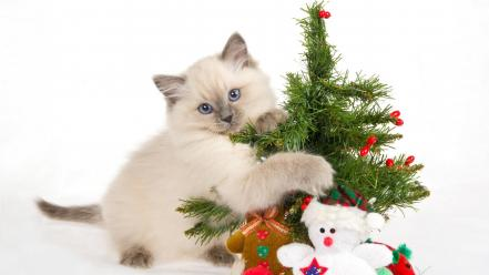 Cats animals christmas white background wallpaper