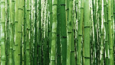 Green japan nature wallpaper