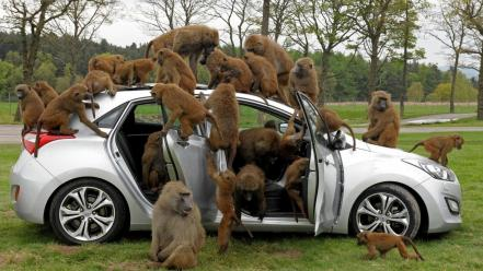 Trees cars animals apes baboon Wallpaper
