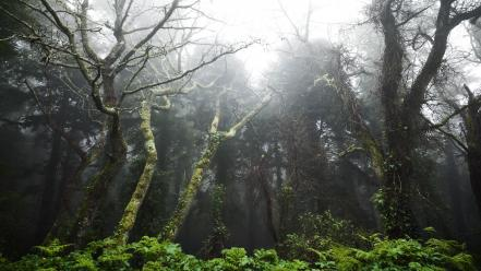 Forests fog mist portugal moss hdr photography Wallpaper