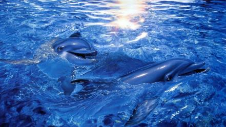 Water sunlight dolphins Wallpaper