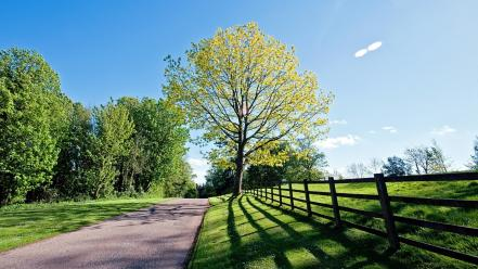 Green landscapes nature trees fences outdoors wallpaper