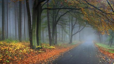 Landscapes trees forest roads autumn wallpaper