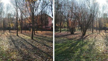 Nature trees forest stereo stereogram wallpaper