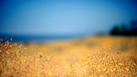 Blue landscapes nature yellow grass sky autumn wallpaper