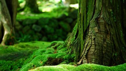 Green nature trees wallpaper
