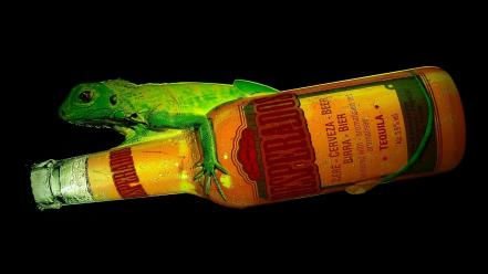 Beers alcohol reptiles black background desperados beer cans wallpaper