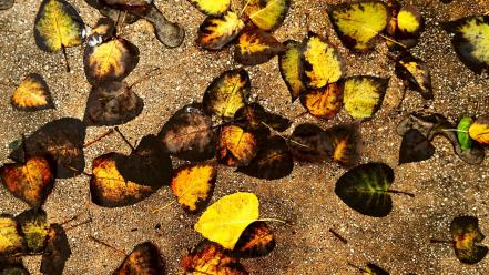 Autumn leaves ground Wallpaper