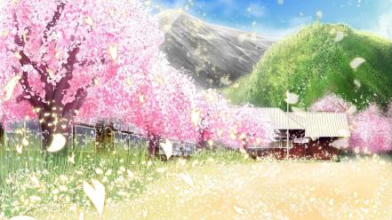 Cherry blossoms grass sakura scenic Wallpaper