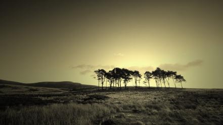 Landscapes trees sepia wallpaper