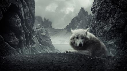 Mountains dark animals rocks wolves wallpaper