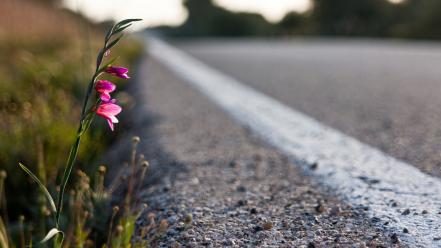 Nature flowers roads Wallpaper