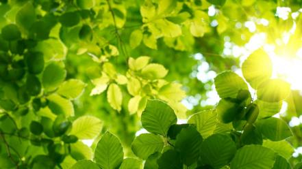 Sun bokeh depth of field green leaves Wallpaper