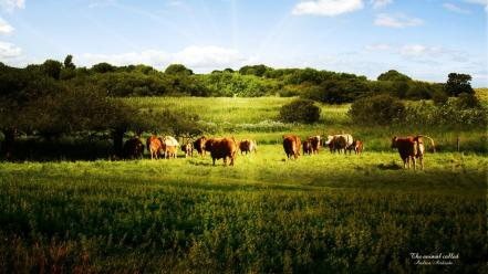 Green trees forest cows natural Wallpaper