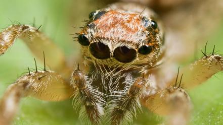 Nature animals insects spiders arachnids wallpaper