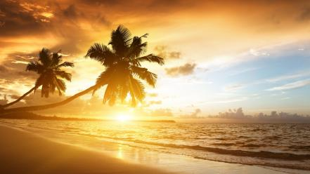 Sunset coast waves palm vacation skies beach wallpaper
