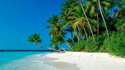Tropical palm trees beach Wallpaper