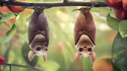 Animals upside down mammals bats branches wallpaper