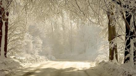 Trees shadows snow white gray hair hoarfrost wallpaper