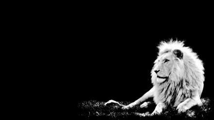 Black and white lions Wallpaper