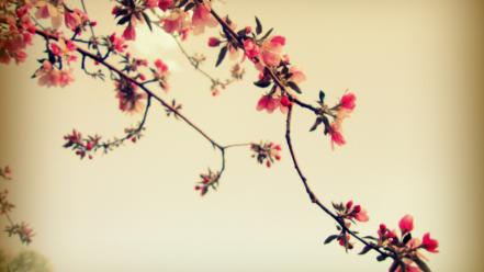 Trees flowers pop plants photo manipulation pink wallpaper