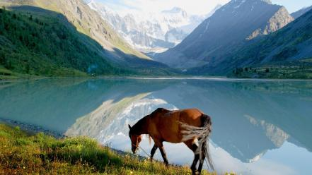 Mountains landscapes nature grass horses lakes skyscapes snow wallpaper
