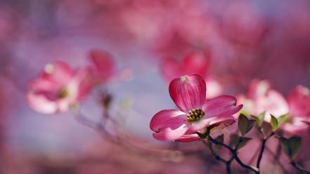 Bokeh depth of field flowers nature wallpaper