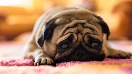 Dogs puppies sad wallpaper