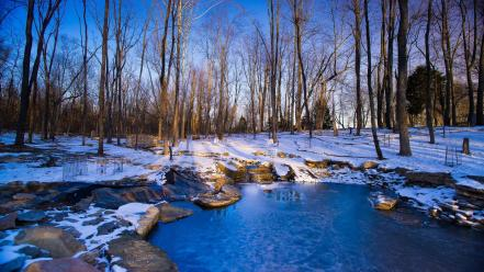 Snow trees ponds wallpaper