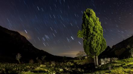 Trees long exposure night sky wallpaper